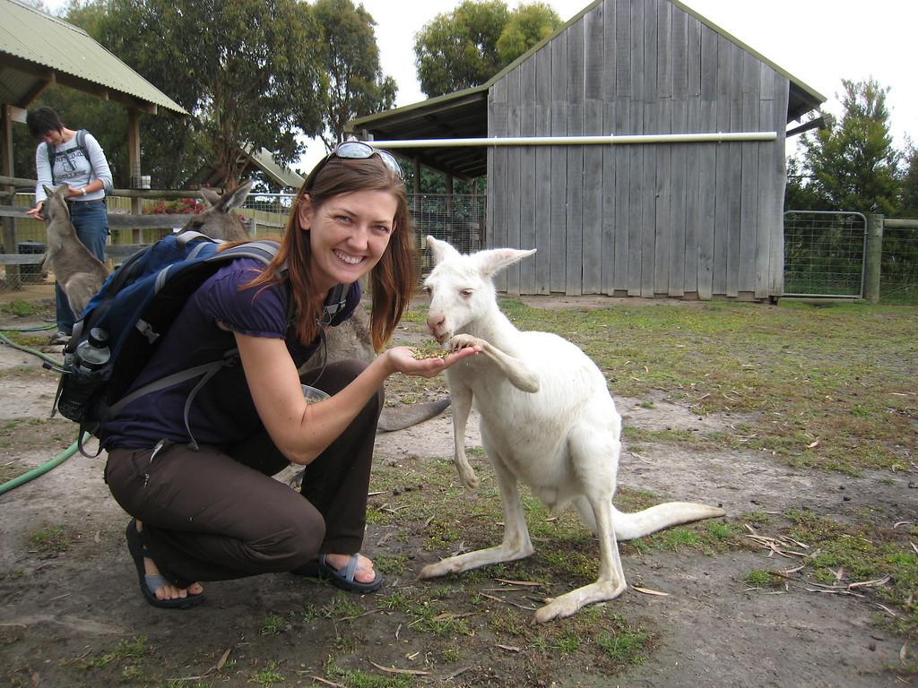 baby albino kangaroo joey
