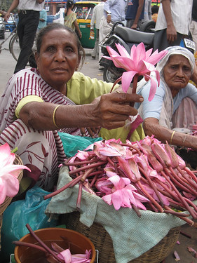 Lotus flowers for sale