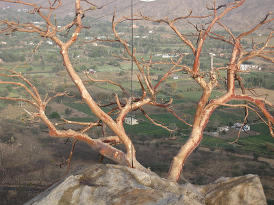 Tree over Pushkar