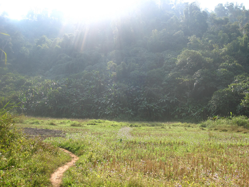 Bokeo Nature Reserve for the Gibbon Experience in Laos